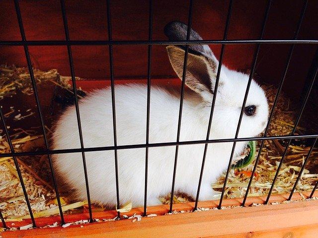 zakrslý králík v kleci