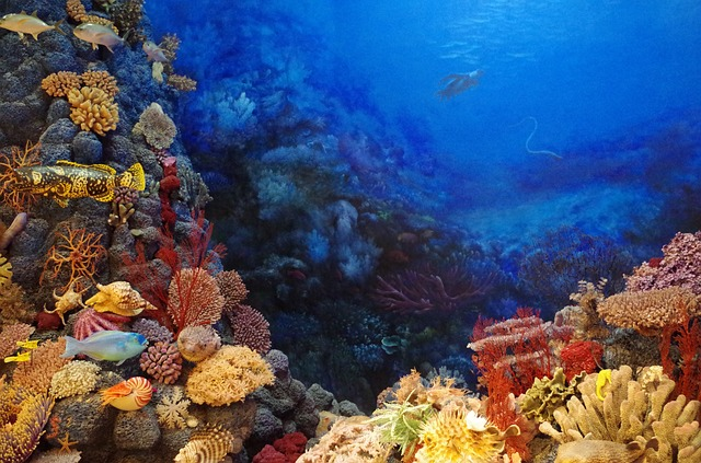 rybičky u korálů