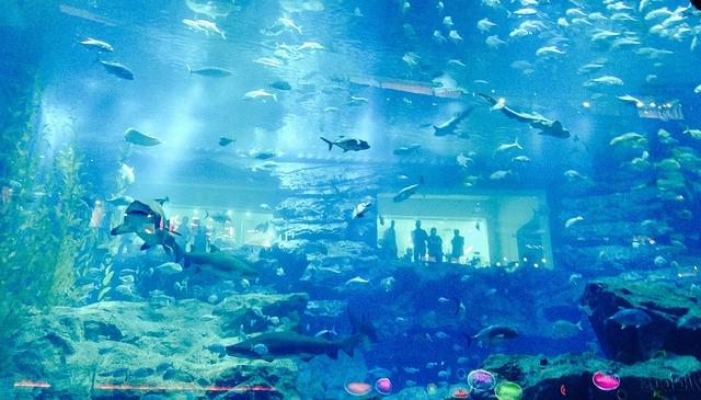 dubaj akvárium