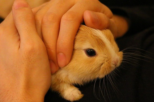 mazlení s králíčkem