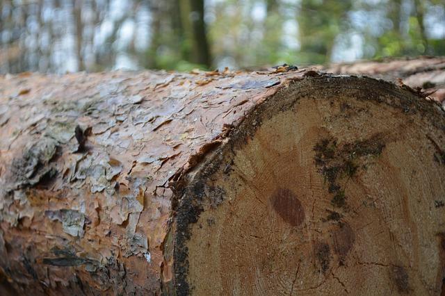 Když dřevo, tak takové, které vás nezklame!